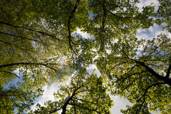 Trees in spring Stock Image