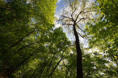 Trees in spring Stock Images