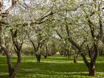 Trees at springtime Stock Photography