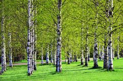 Trees in springtime Stock Images