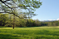 Trees in springtime,Cades Cove. Stock Photography