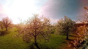 Trees in springtime flowers plants nature background summertime aerial view stock video