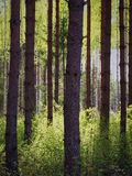 Trees in the Springtime Forest. Stock Photo