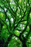 Trees in Springtime Stock Photo