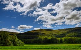 Trees in springtime on the mountain royalty free stock photo