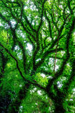 Trees in Springtime Stock Image