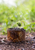 Trees sprouted in rusty cans and raindrops Royalty Free Stock Photos