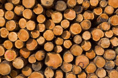 Trees stacked after logging. Stack of logs ater felling activities Royalty Free Stock Image