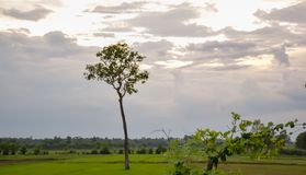 Trees that stand in the green fields and the sky. stock photography