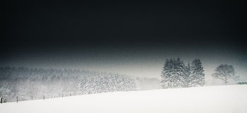 Trees standing in dark snowy conditions Royalty Free Stock Images
