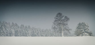 Trees standing in dark snowy conditions Royalty Free Stock Image