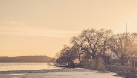 Trees standing by the side of a lake in sunrise/sunset. Lovely colors and glow. royalty free stock photos