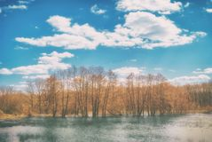 Trees standing in the spring in the water under a cloudy sky. Forest flooded by spring flow of the river. Water landscape. Under a beautiful sunny sky royalty free stock photography
