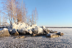 The trees standing on the stones covered with ice on the riverbank Royalty Free Stock Photos
