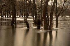 Trees standing in water Stock Photography
