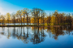Trees Standing In Water During A Spring Flood Royalty Free Stock Images