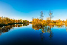 Trees Standing In Water During A Spring Flood. Sunny day. Royalty Free Stock Images