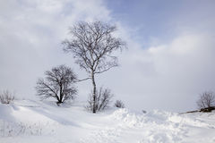 Trees Standing In Winter stock images