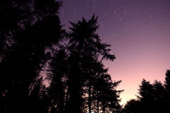 Trees star trail Royalty Free Stock Photo