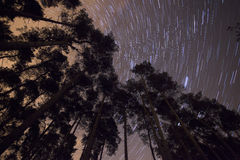 Trees star trail Royalty Free Stock Photography