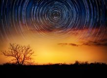 Trees on starry background with bright stars trails. Time lapse, Stock Image