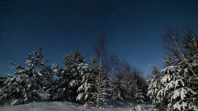Trees in starry winter night stock footage