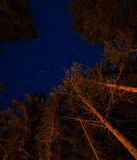 Trees and Stars above a campfire Royalty Free Stock Image