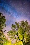 Trees and stars at night. Trees illuminatted and stars at night royalty free stock photo