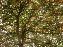 The fall season Stock Images