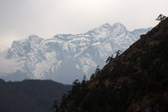 Trees at steep slope and snow mountain, Himalayas Stock Photo