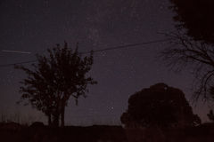 Trees on stellar sky Royalty Free Stock Photography