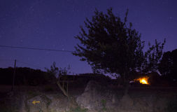 Trees on stellar sky Stock Images