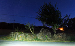 Trees on stellar sky. Night view of trees on stellar sky Stock Images