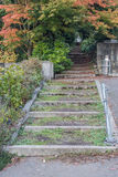 Trees And Steps 2 Stock Photo