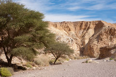 Trees in the stone desert - Red Canyon, Stock Photography