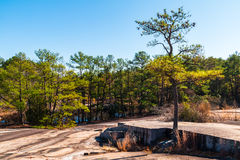 Trees and stone ground in Stone Mountain Park, Georgia, USA Royalty Free Stock Images