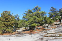 Trees on Stone Mountain in Georgia. Royalty Free Stock Photography