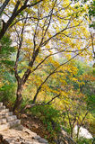 The trees and stone step _ autumnal scenery Stock Image