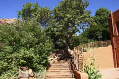 Trees and Stone Steps in Desert Oasis Stock Photography