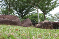 Trees and Stones, Close Up. A Close Up View of Tropical Trees Standing together to Cover Some Hard Stones Stock Image