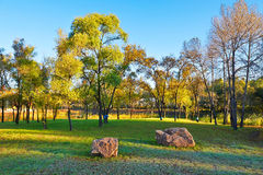 The trees and stones on the lawn Stock Photo
