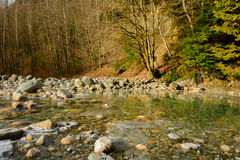 Trees and stones on the Lynn Creek Royalty Free Stock Photo