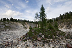 Trees and stones in valley of mounain river Stock Photography