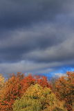Trees and Storm Clouds Background Royalty Free Stock Image