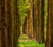 Trees in a straight line Royalty Free Stock Photography