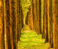 Trees in a straight line Royalty Free Stock Image