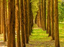 Trees in a straight line Stock Images