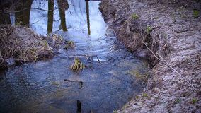 Between trees the stream flows. Between dry branches the stream flows stock footage