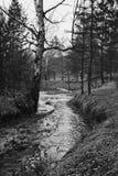 Trees, stream, spring Stock Photos