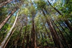 Trees Streching Upward Stock Image